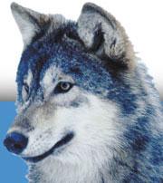 Gone Wild Kennels in Cochrane, Alberta - Dog Boarding, Cat