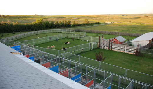 Gone Wild Kennels in Cochrane, Alberta - Dog Boarding, Cat Boarding